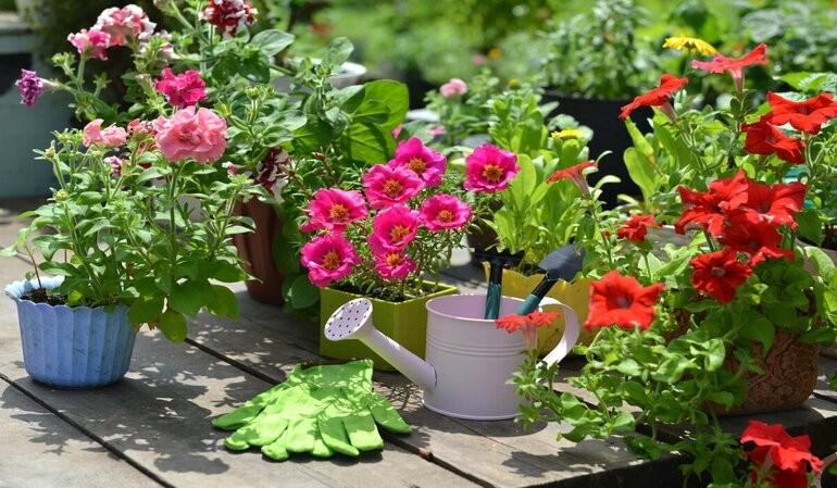 طراحی وب سایت گل و گیاه
